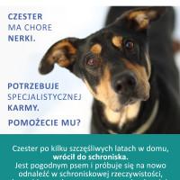 Czester renal