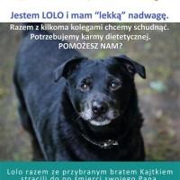 plakat lolo_edited-1