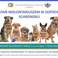 plakat wolontariat_szkolenie marzec